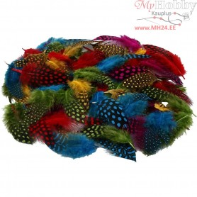 Guinea fowl feathers , asstd colours, 50g