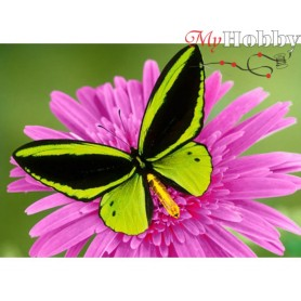 Diamond Embroidery Painting Kit Butterfly, Article: DE471 Collection D'Art - size 27x38 cm.