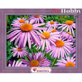 Diamond Painting Full Kits 40х30cm  Mosfa - AM1702