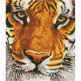 Bengal magic, 1 pack
